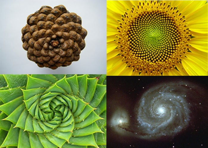 Фракталы в природе и космосе