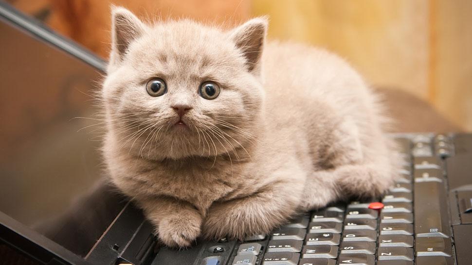 Кошка тоже хочет сделать свой вебсайт